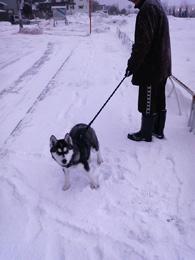 2009.02.01_osanpo.jpg
